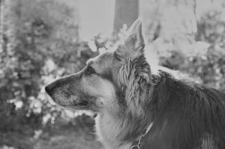 asheville pet photographer