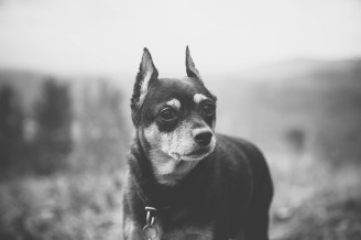 asheville dog photographer